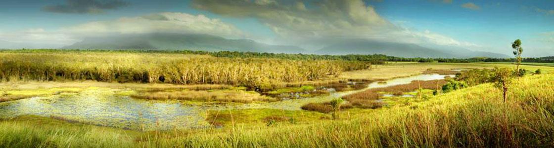 Eubenangee Wetlands